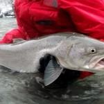 big-salmon-slovenia