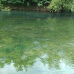 river-ljubljanica-gin-clear-water