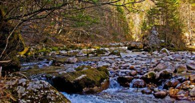 V RD Bistrica Domžale vabijo na praznovanje Dneva slovenskih ribičev