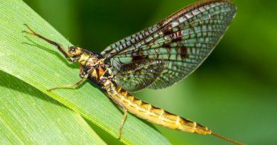 Si muhar in ne poznaš teh žuželk?