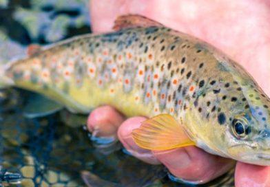 Ribolov na majhnih vodotokih ne ponuja le majhnih rib