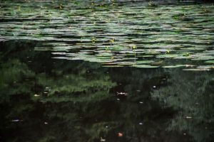 Linj ima rad stoječe ali počasi tekoče vode, ki so obilno porasle.