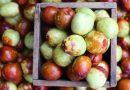 Spoznaj sadež, ki ima več vitamina C kot limona