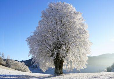 Pogled v preteklost: zime so bile veliko bolj mrzle kot je letošnja