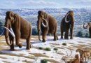Mamut iz Nevelj je še danes eden bolje ohranjenih ostankov mamuta v Evropi