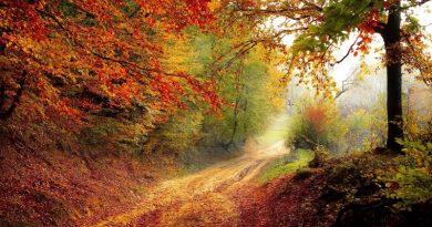 Gozdovi, pljuča Slovenije